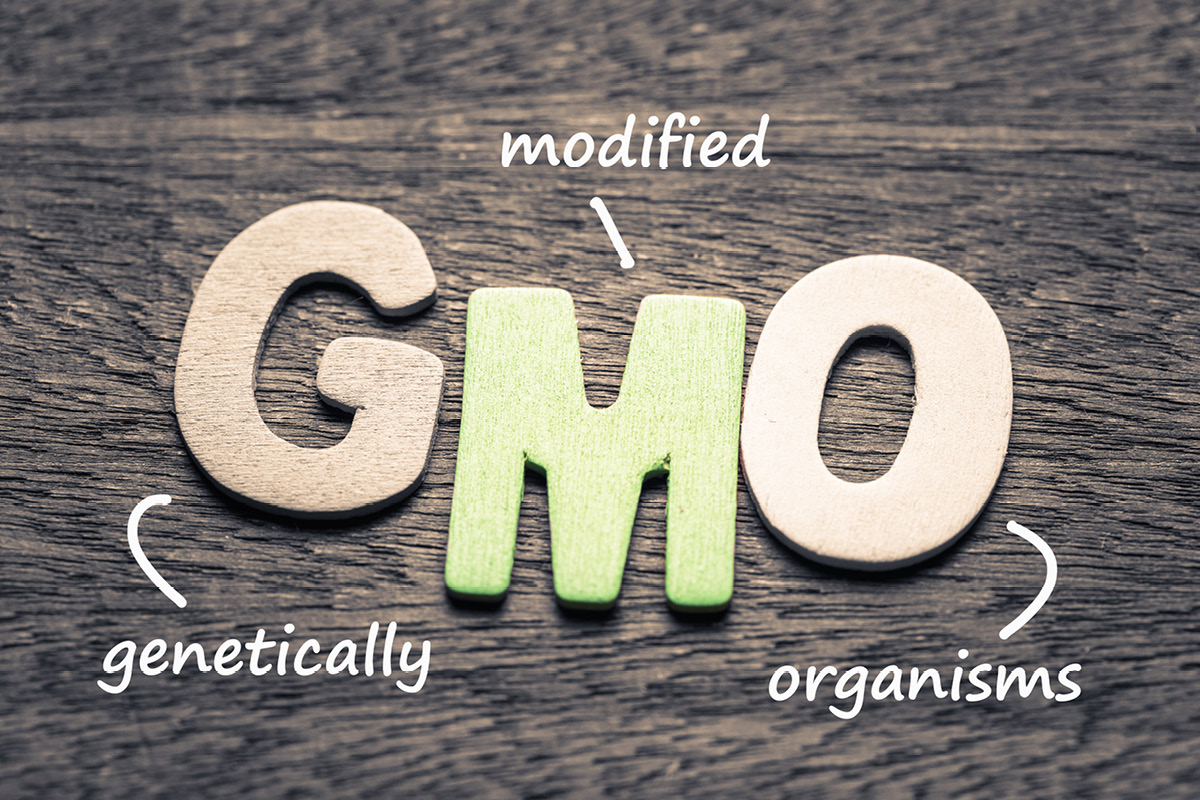 Do GMO foods (genetically modified organisms) contribute to cancer, gut issues, hormonal imbalance, non-alcoholic fatty liver, Alzheimer's, and Parkinson's?