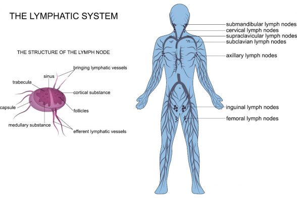 Detoxing Your Lymphatic System