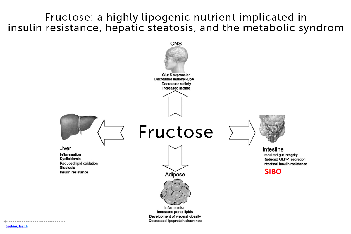 Fructose and fatty Liver remake