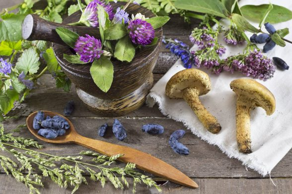 The Healing Powers of Medicinal Mushrooms