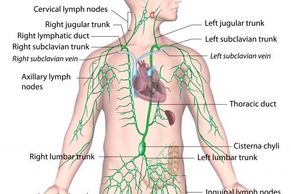 The Weight Gain-Lymph Connection